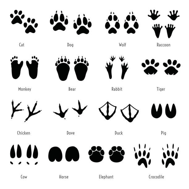 Foot trail vector. Animal, birds and reptile footprint set.