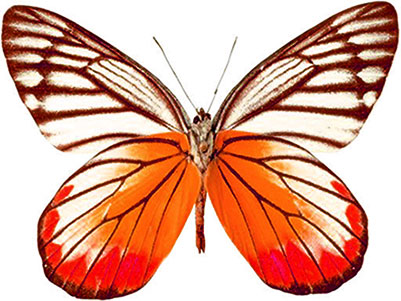 Free Animated Butterfly Clipart.