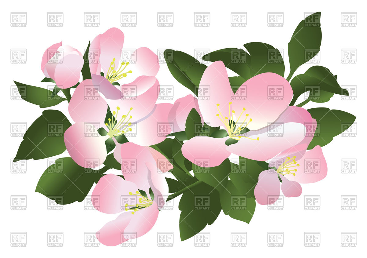 Flowers of apple tree Vector Image of Signs, Symbols, Maps.