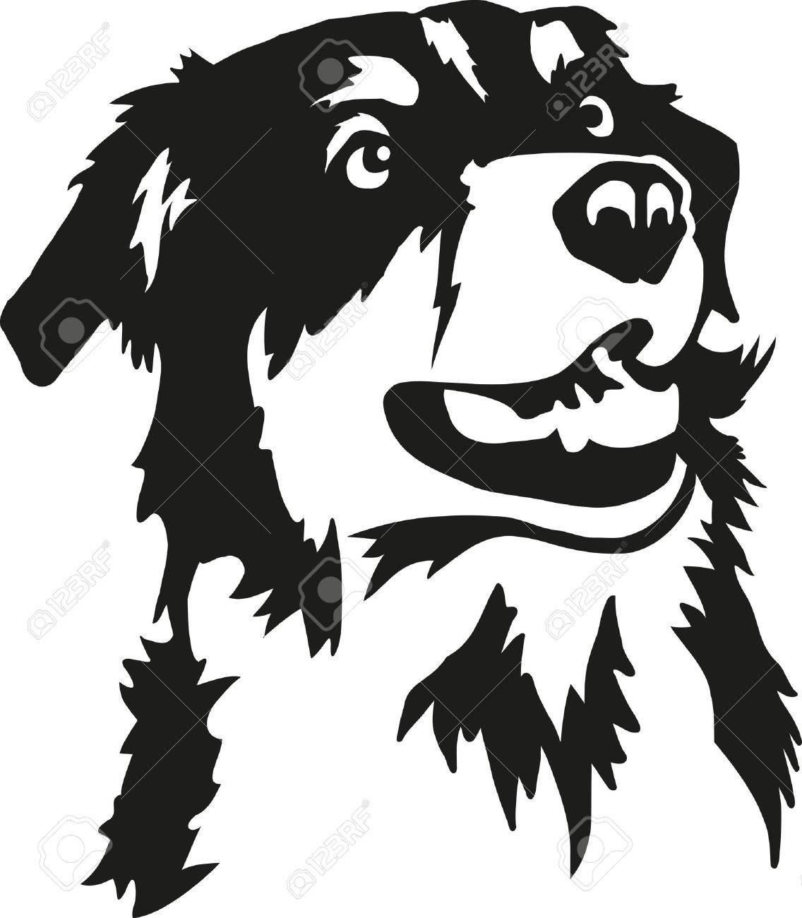 Australian Shepherd head.