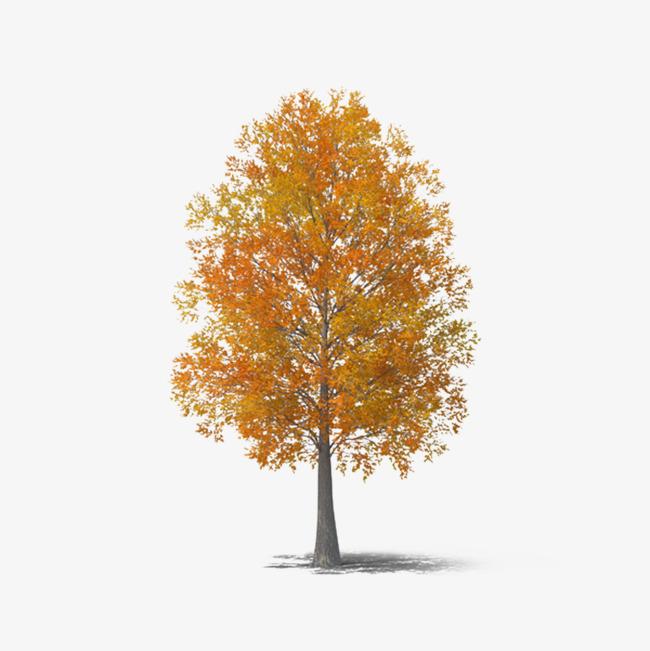 Autumn Tree, Tree Clipart, Fall, Tree PN #86620.