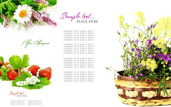 free background images flowers #2