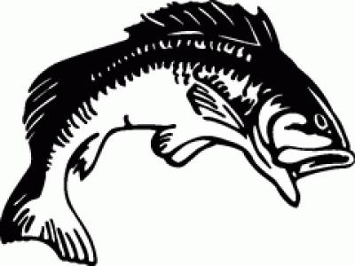 Free clip art bass fish.