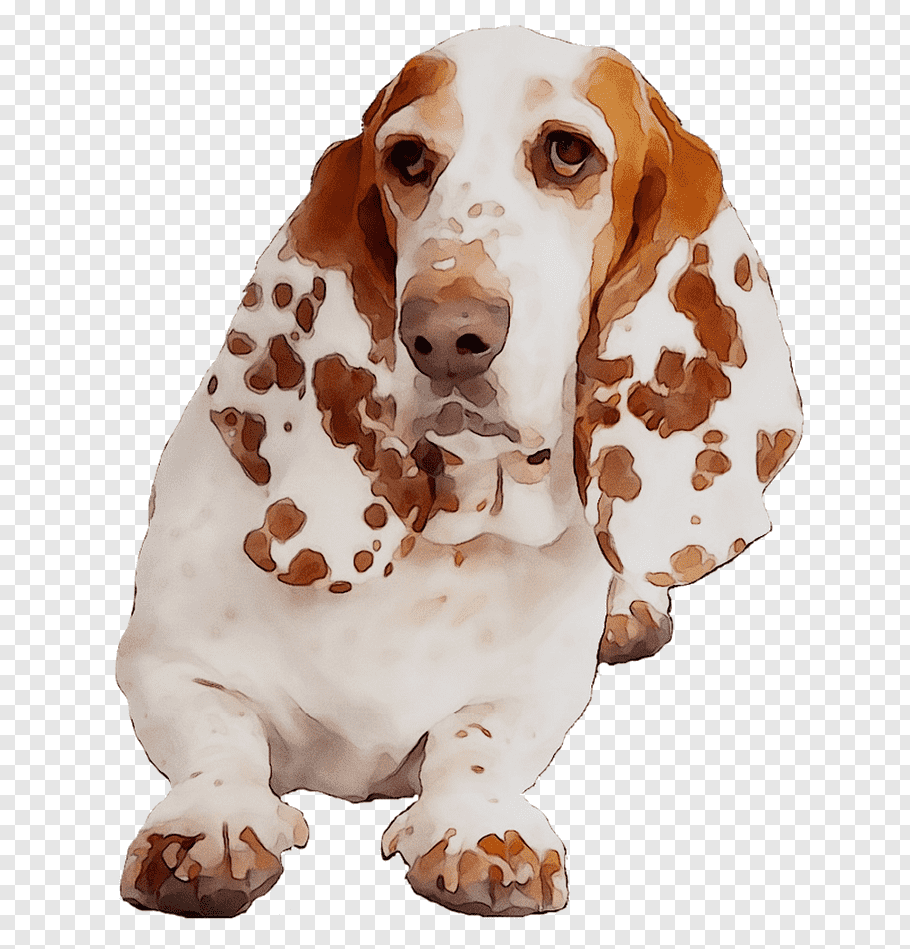 Cartoon Dog, Basset Hound, Companion Dog, Spaniel, Breed.