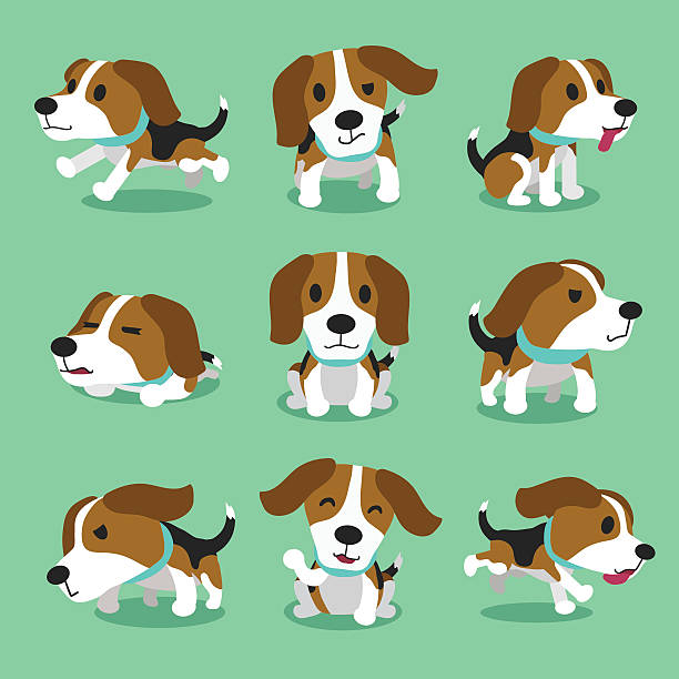 Best Beagle Illustrations, Royalty.