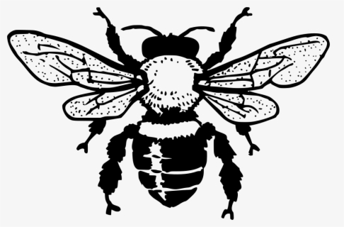 Free Bee Black And White Clip Art with No Background.