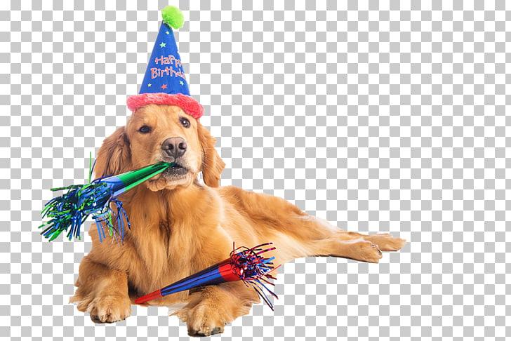 Birthday cake Dalmatian dog Puppy Party, birthdaydog PNG.
