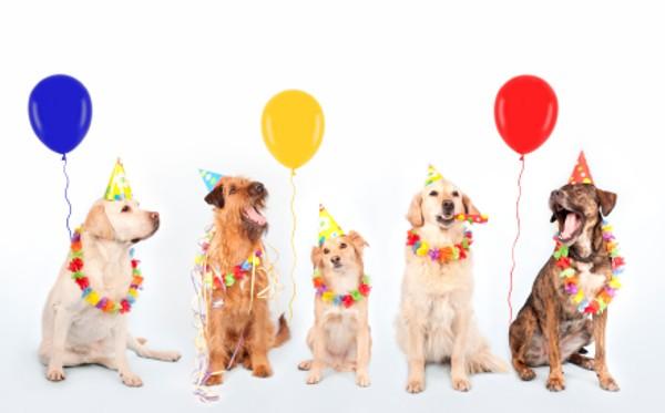 Happy Birthday Clipart Dogs.