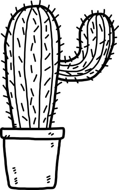 Cactus clipart black and white » Clipart Station.