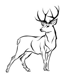 Buck clipart drawing, Buck drawing Transparent FREE for.