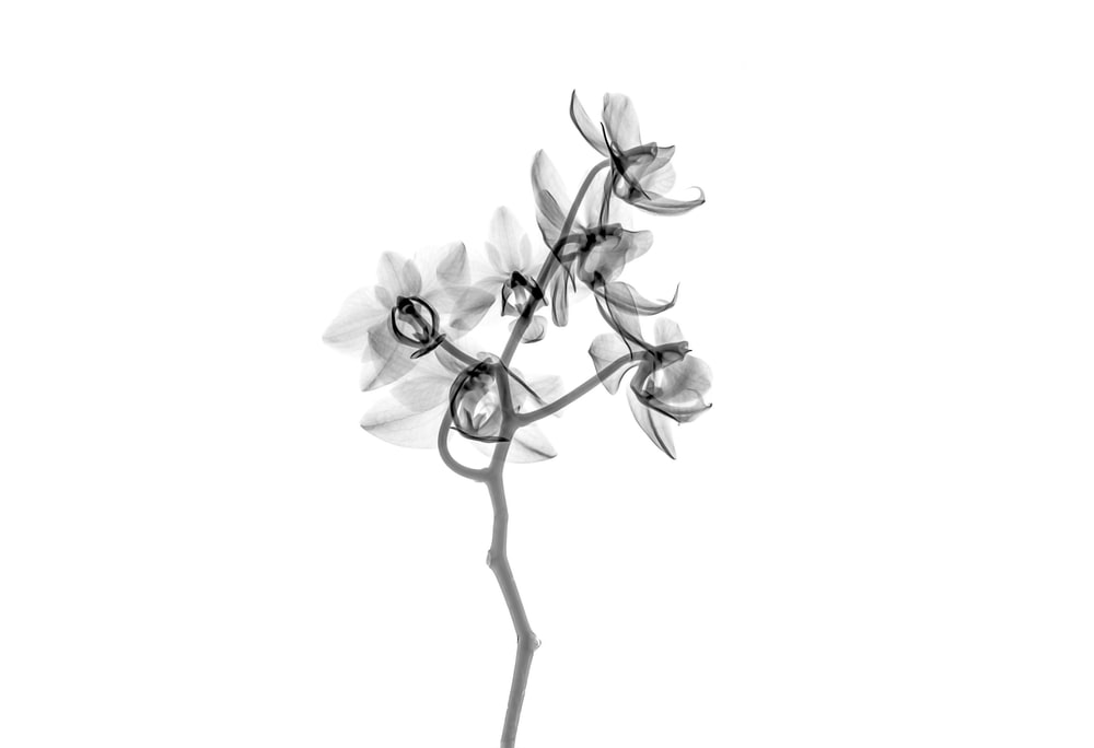 500+ Black And White Flowers Pictures [HD].