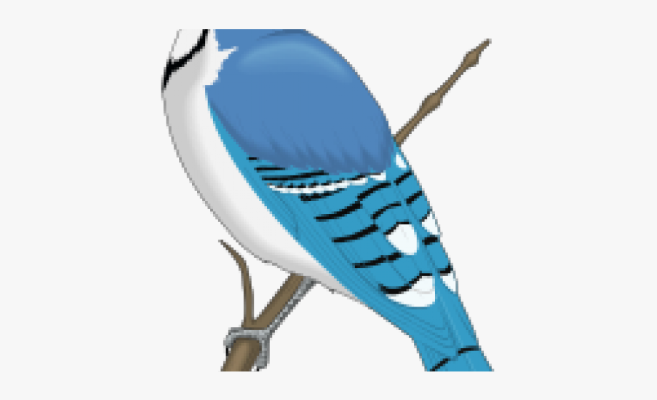 Blue Jay Clip Art , Transparent Cartoon, Free Cliparts.