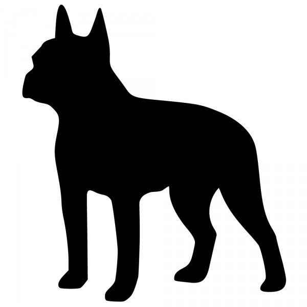 Drawings Of Boston Terriers Terrier Clipart Litle Pups.