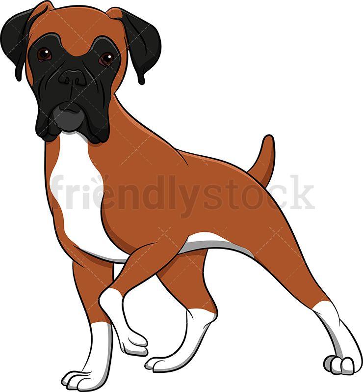 Alerted Boxer Dog in 2019.