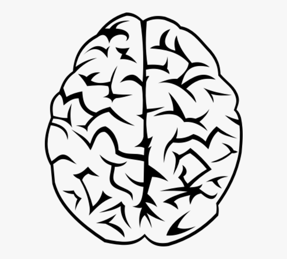 Brain Vector Png.