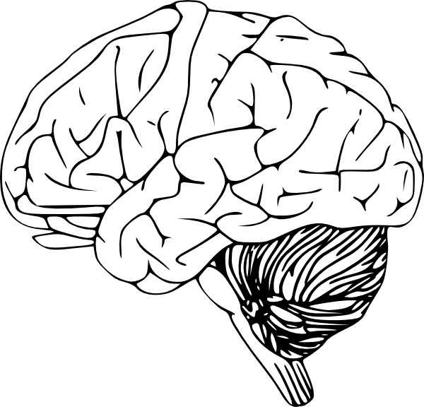 Brain clip art Free vector in Open office drawing svg ( .svg.