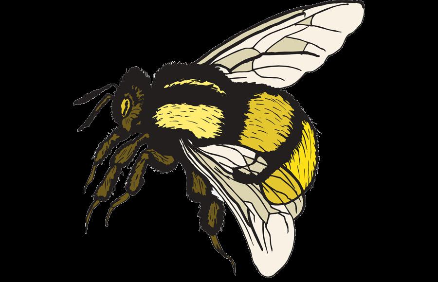 Bee Bumblebee Clip Art Free Bumble Clipart Transparent Png.