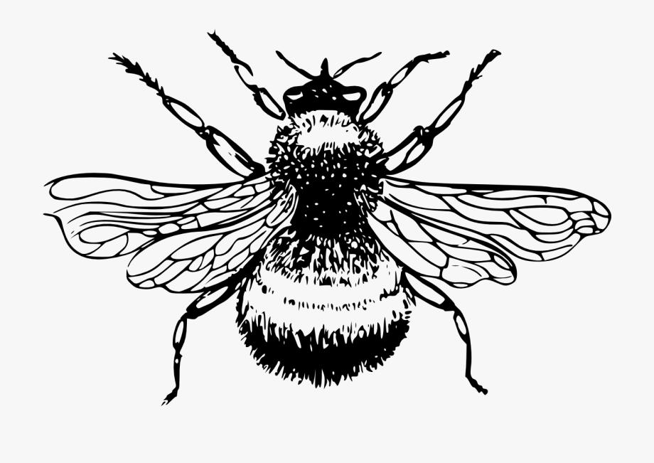Bee Stamp Google.