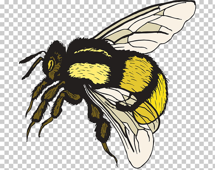 Bumblebee , Free Bumble Bee PNG clipart.