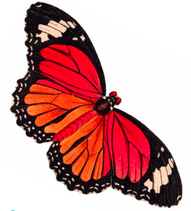 Cute Butterfly Clipart.