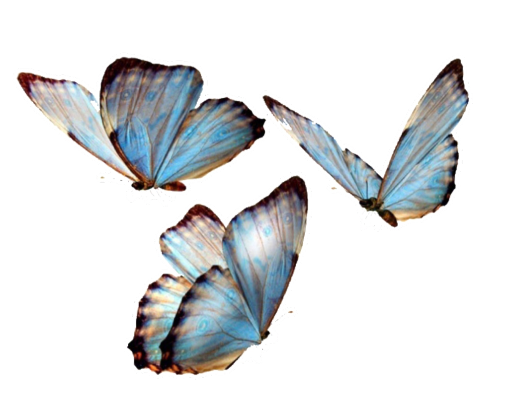 butterfly butterflies nature png overlay overlays editi.