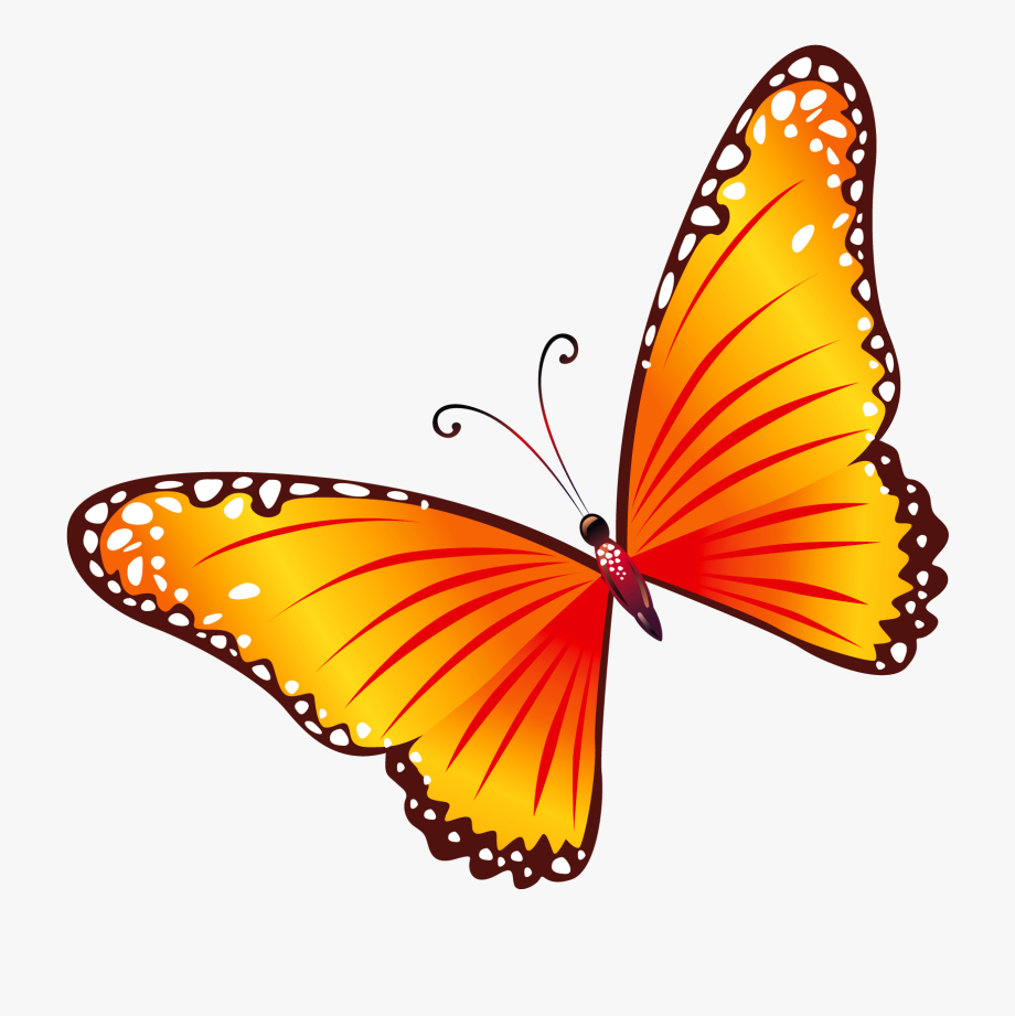 Butterfly Clipart Free Clipart Images Clipartcow.