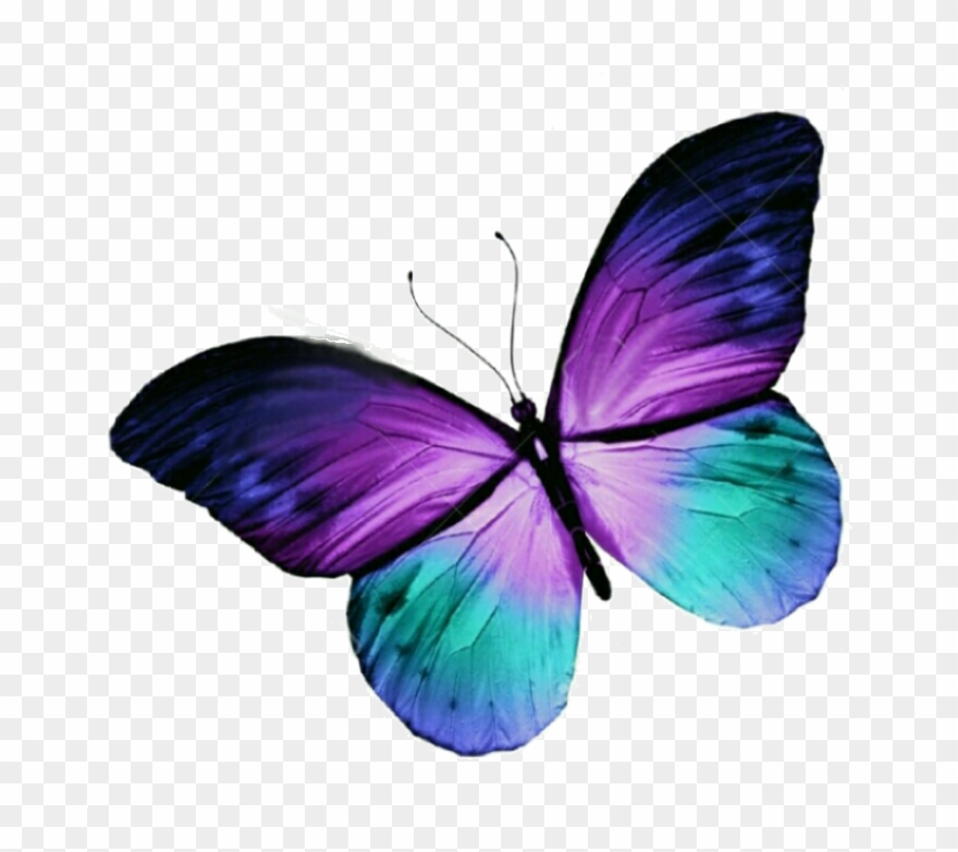 Butterfly Tattoo Purple Blue Free Hq Image Clipart.