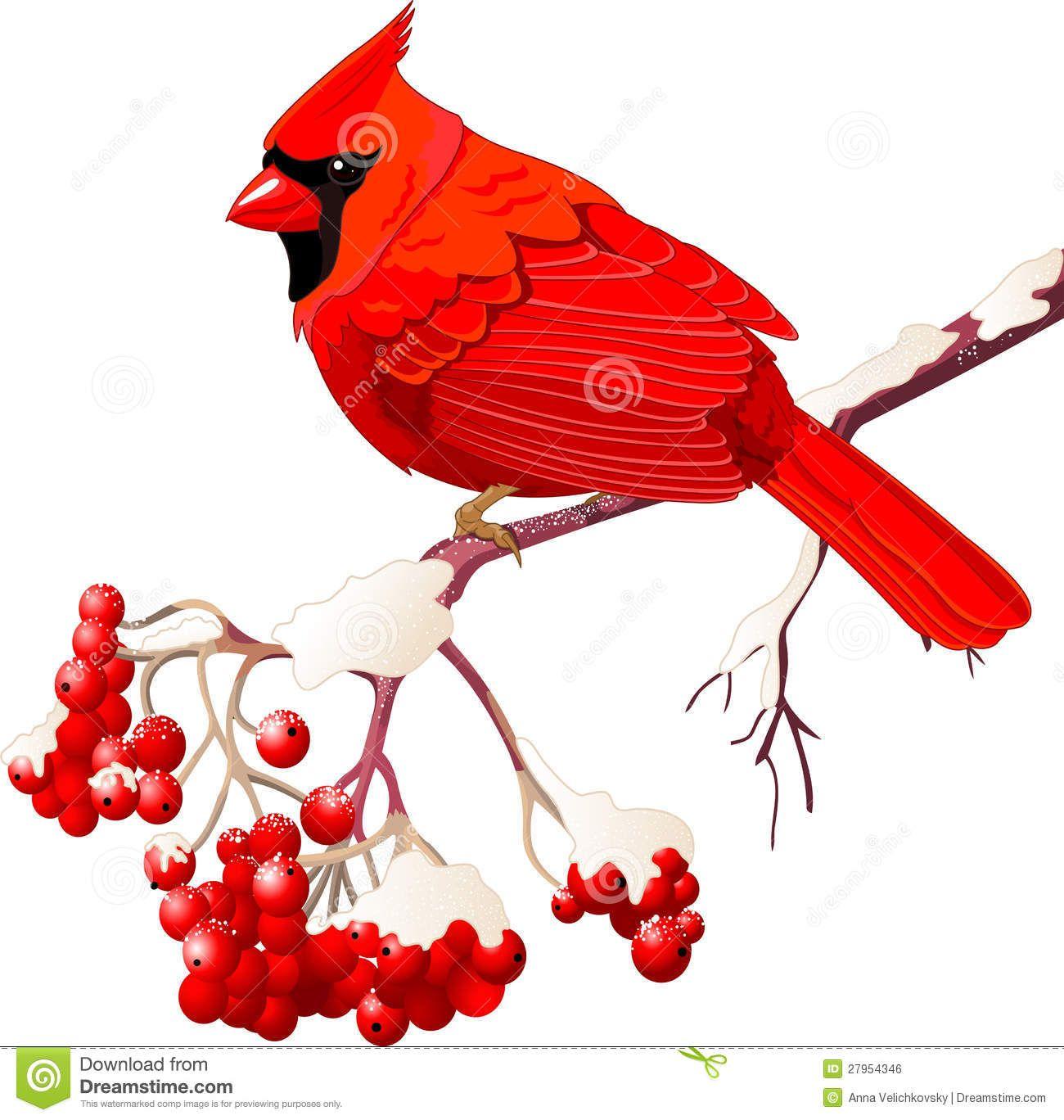 cardinal bird free clipart.