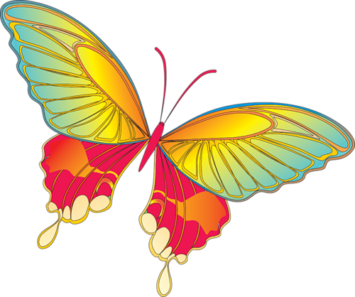 Cartoon Butterfly Image.