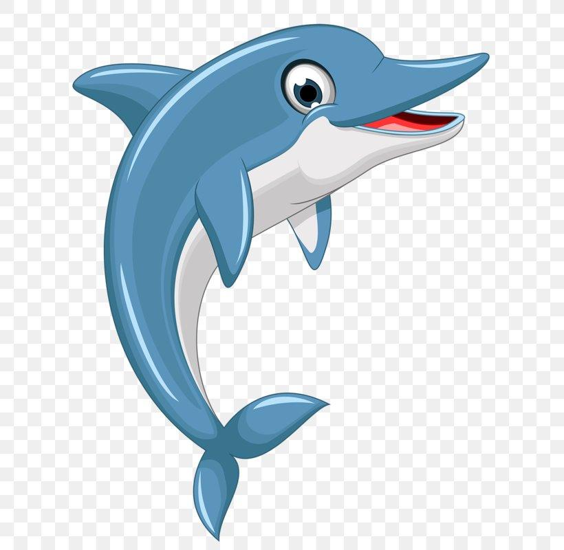 Dolphin Euclidean Vector Clip Art, PNG, 671x800px, Dolphin.