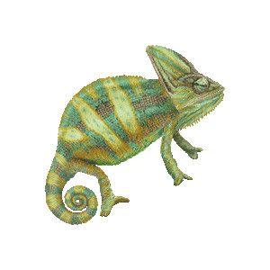 Chameleon Art.