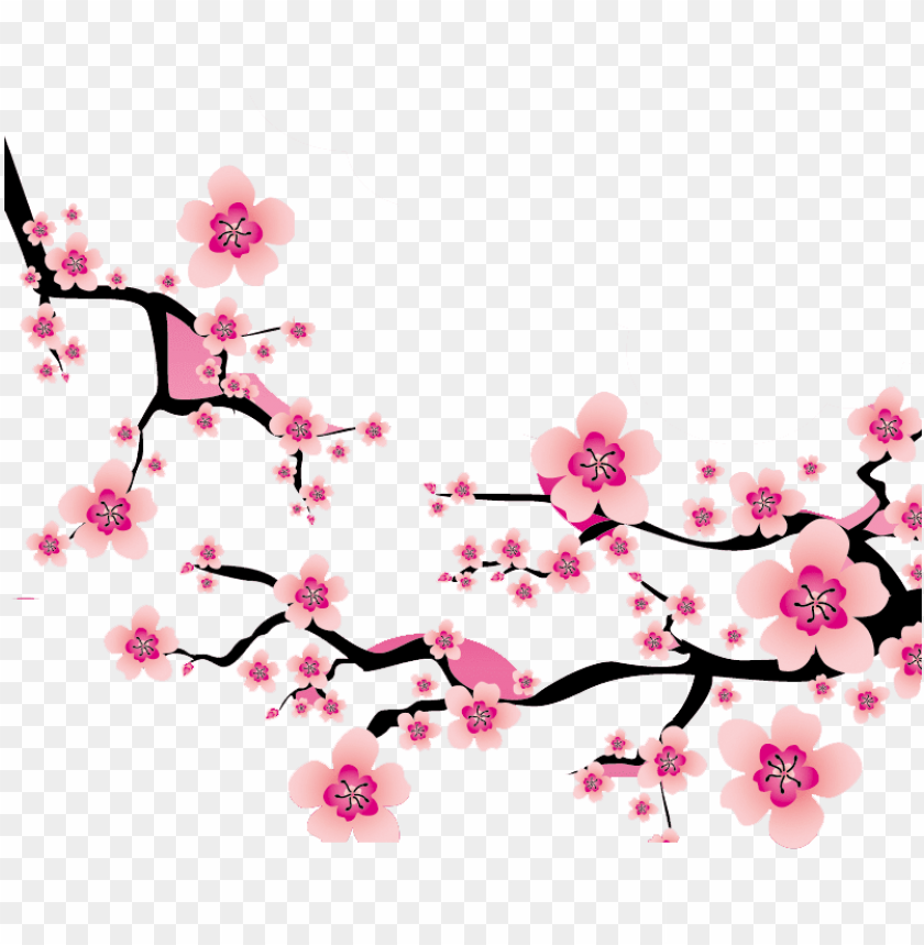 sakura blossom clipart plum flower.