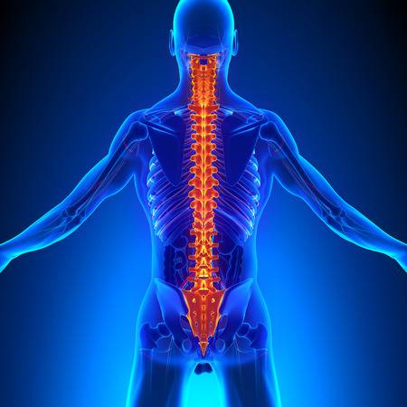 2,573 Chiropractic Stock Illustrations, Cliparts And Royalty Free.