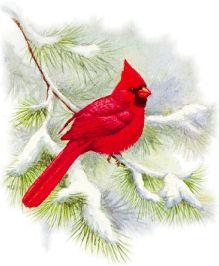 Cardinal clipart holiday.