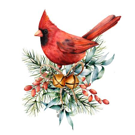 993 Christmas Cardinal Cliparts, Stock Vector And Royalty Free.