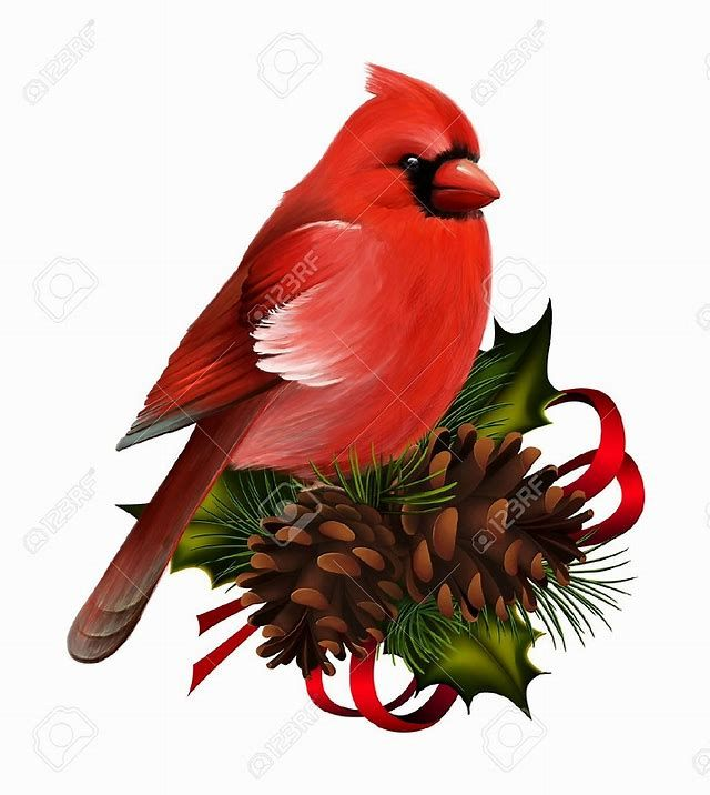 Image result for Christmas Cardinal Painting.