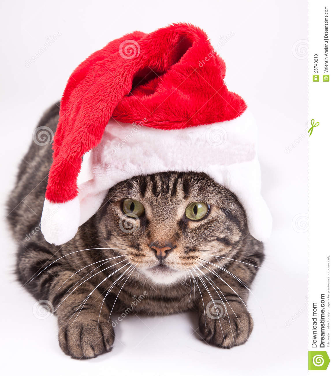 Free christmas cat clipart.