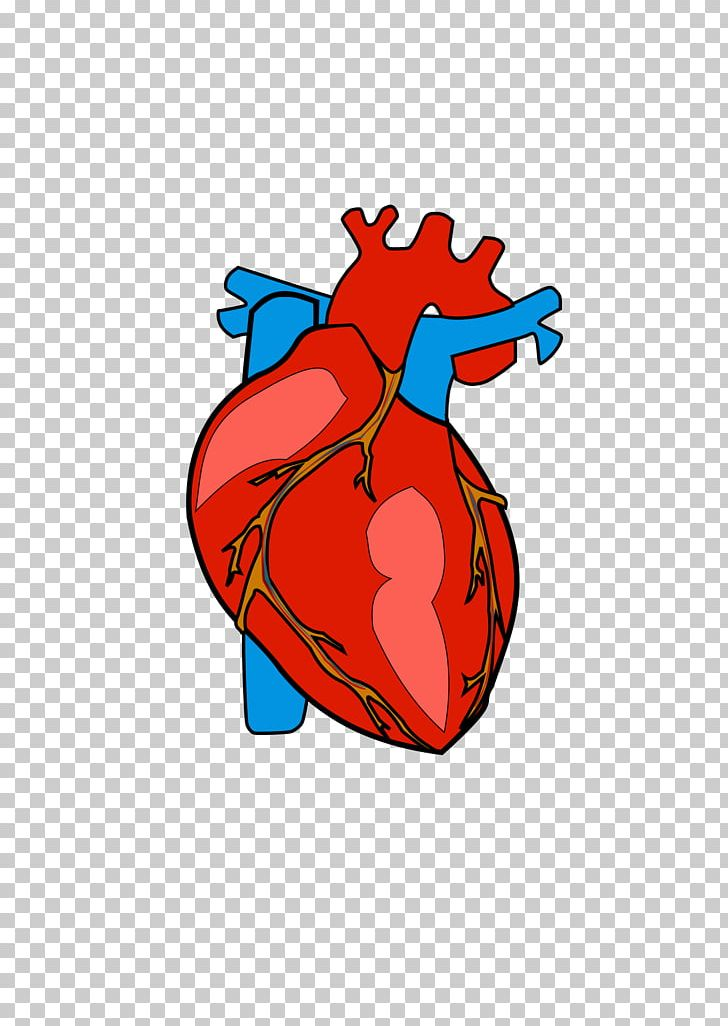 Heart Anatomy PNG, Clipart, Anatomy, Area, Art, Body, Clip Art Free.