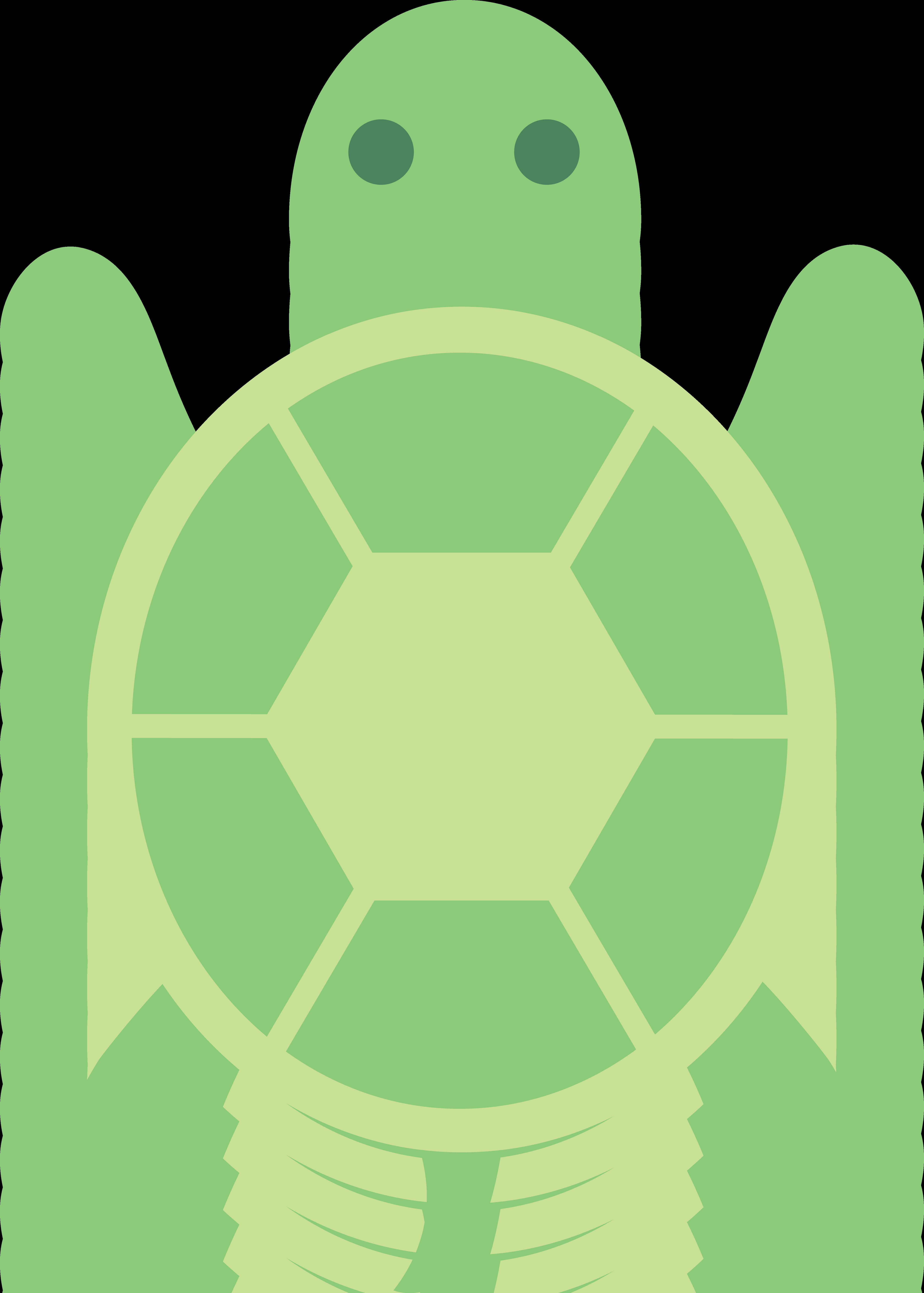 Cartoon Turtle Pictures.