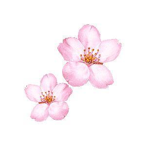Cherry Blossom, Sakura clipart / Free clip art.