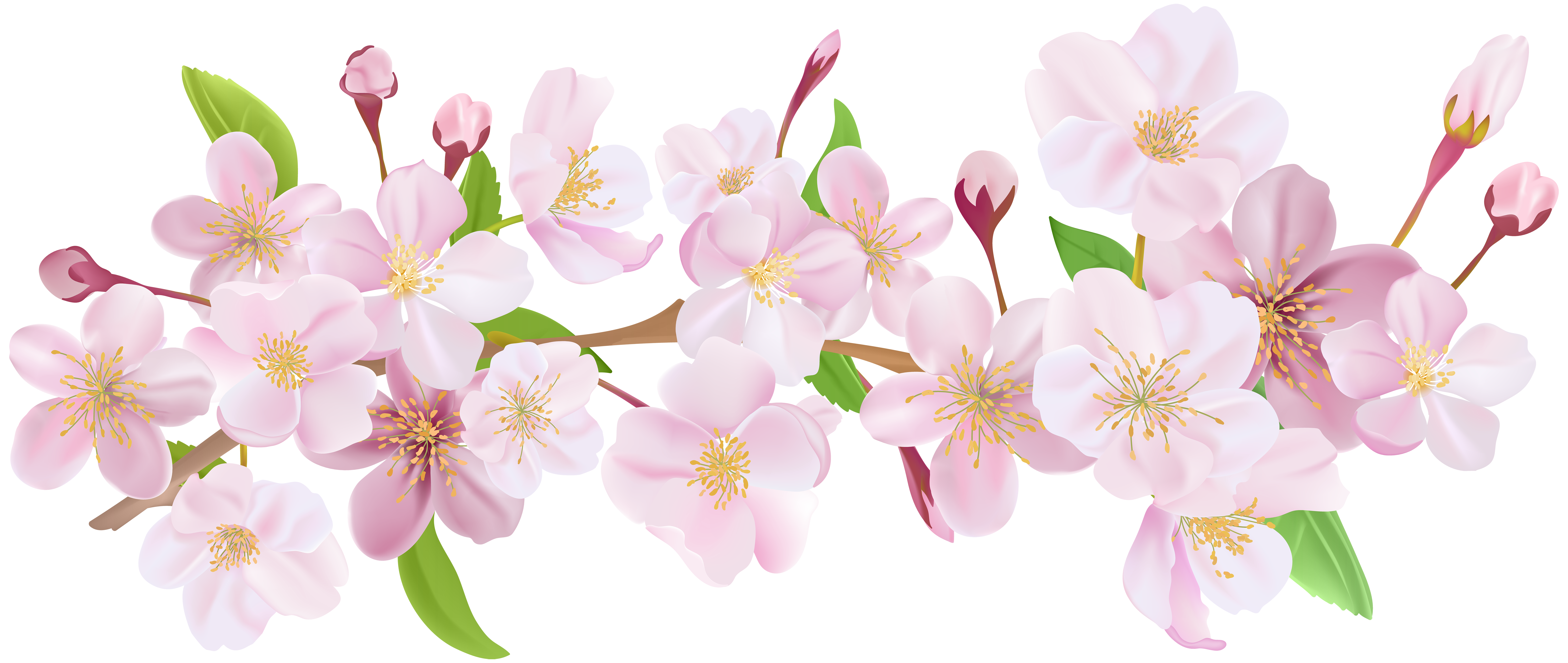 Cherry blossom clip art clipart images gallery for free download.