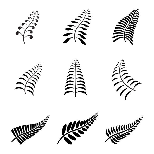Best Fern Illustrations, Royalty.