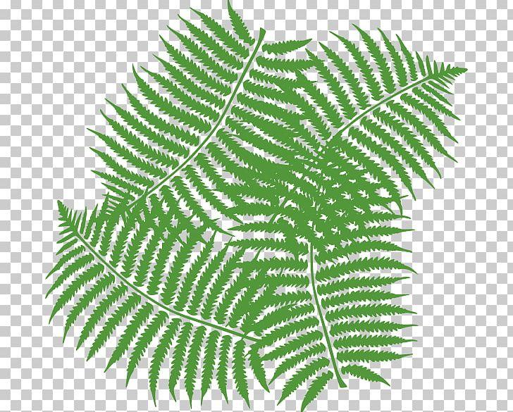 Fern Leaf PNG, Clipart, Burknar, Clip Art, Drawing, Fern, Fern.