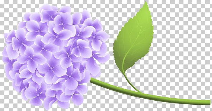 Hydrangea PNG, Clipart, Clipart, Clip Art, Download, Floral Design.