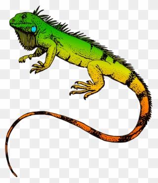 Free PNG Iguana Clip Art Download.