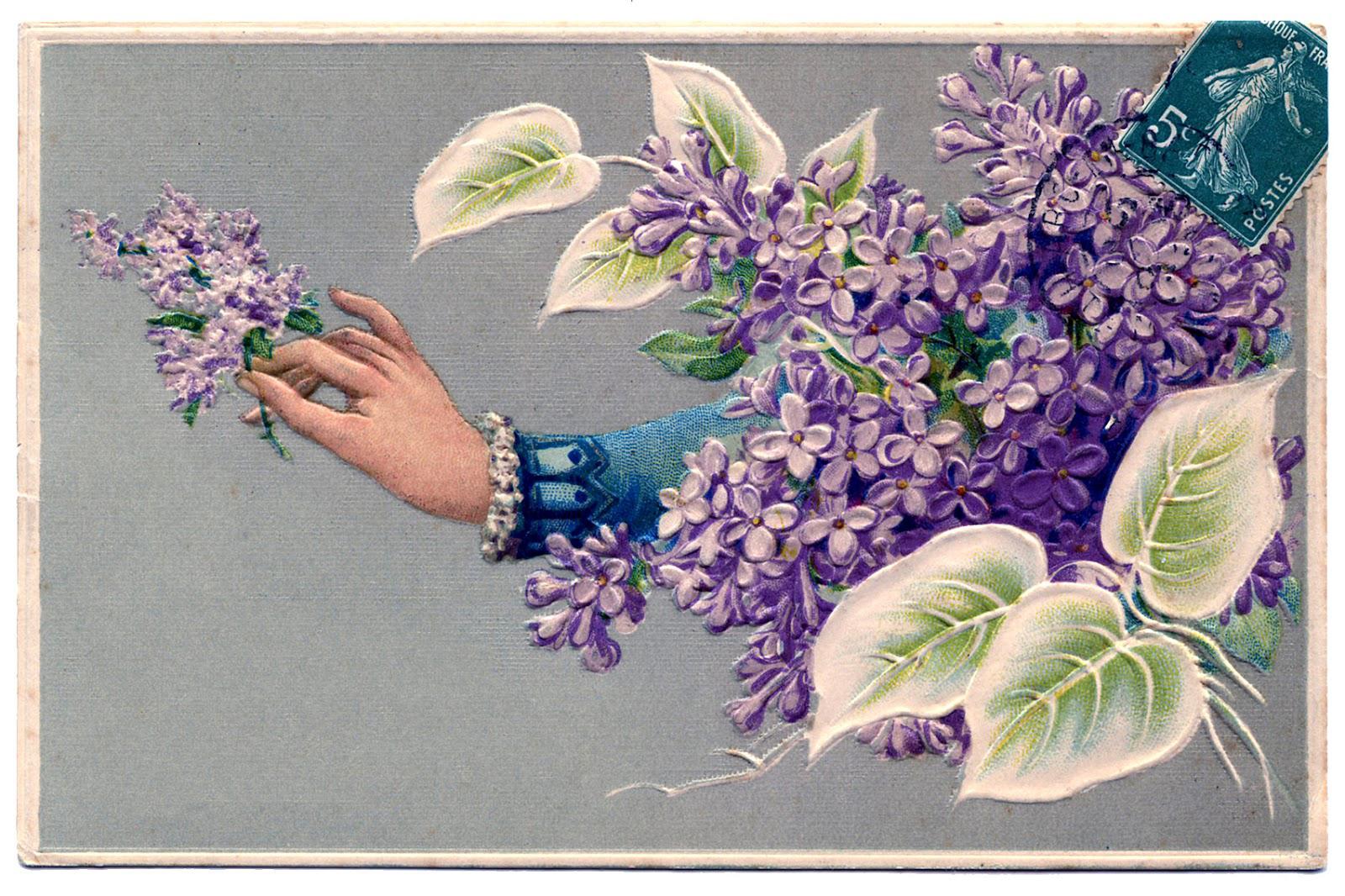 8 Free Clip Art Lilacs!.
