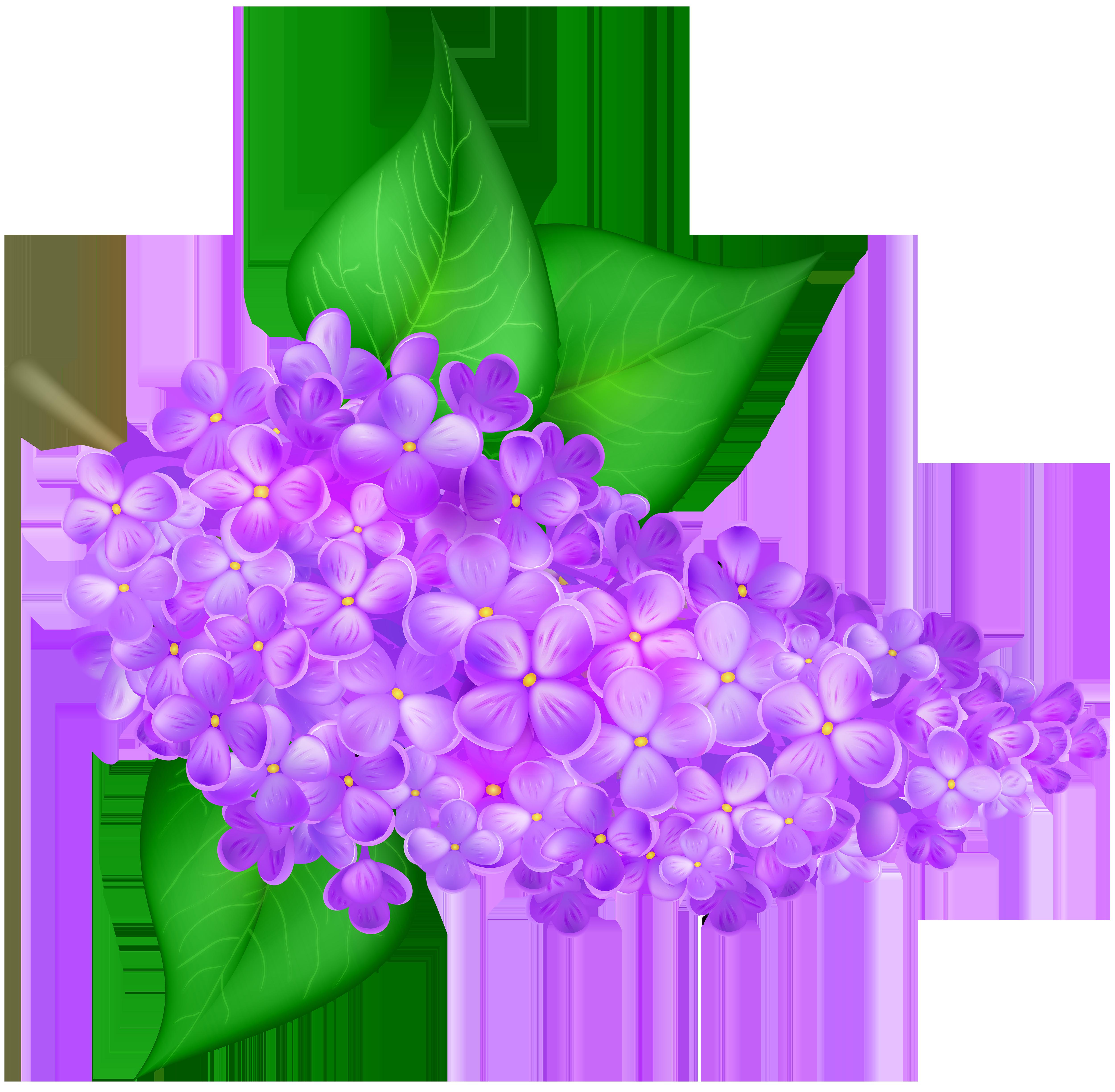 Lilac Flower Transparent PNG Clip Art Image.