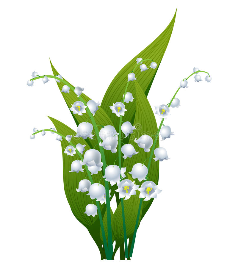 69+ Lily Of The Valley Clipart.