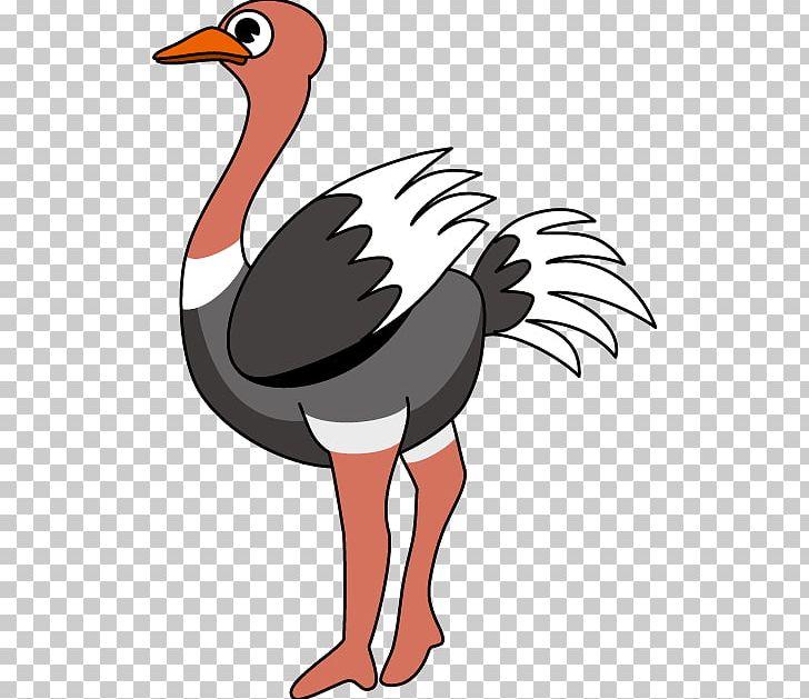 Common Ostrich Free Content PNG, Clipart, Art, Artwork, Beak, Bird.