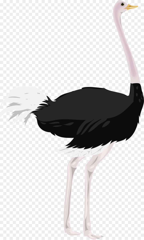 Common ostrich Computer Icons Clip art.